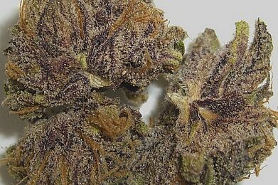 Grape Ape Top Shelf