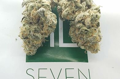 ***NEW*** COOKIES & CREAM -SEVEN LEAVES CULTIVATION