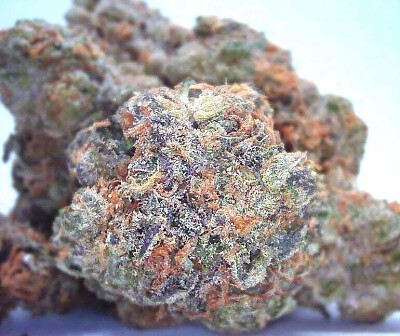 Blue Cookies Marijuana, Order Weed Online From Site 74