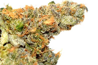 Cookies ( Super Top Shelf )