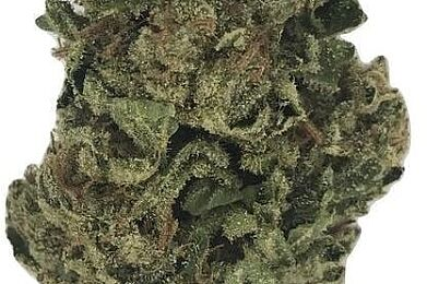 #Key Lime Pie - 20.37% Cannabinoids