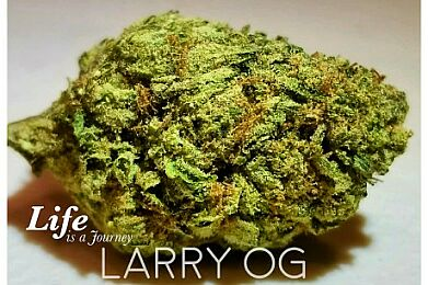 Wake and Bake 10am-1pm 10% off entire order