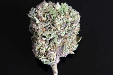 Connected Cannabis - Galactic Gas