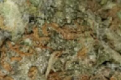 Private Reserve Platinum Girl Scout Cookies