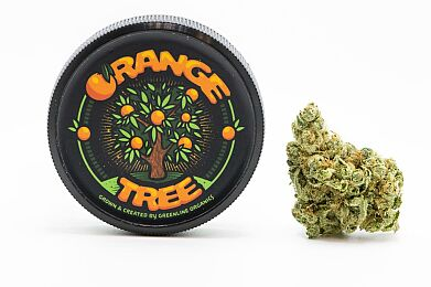 1/8 Official - Orange Tree
