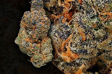 *NEW* Platinum Girl Scout Cookies