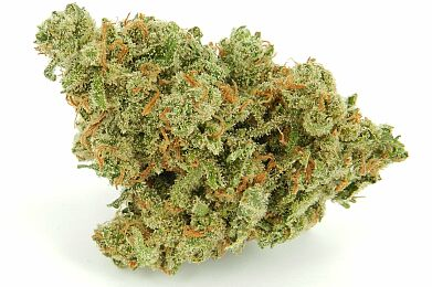 J1 *$100 OUNCE SPECIAL*