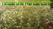 Timberline Herbal Clinic and Wellness Center - Recreational