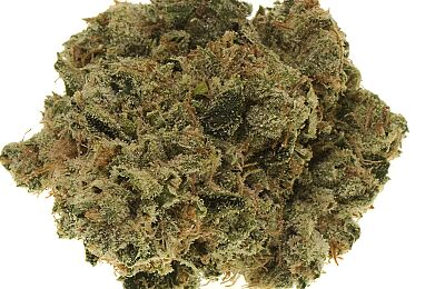 Headband Diesel - Premium Flower - Just Herb