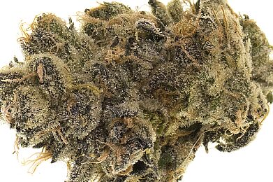 Sunset - Premium Flower - Just Herb
