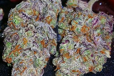 Purple Sherbet