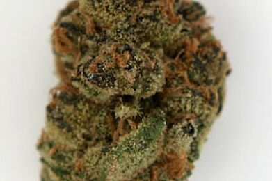Emerald Family Farms - 3.5g - Cuvee Cookies (Indica 21.92%)