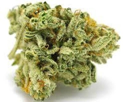 Image result for gelato glue prime cannabis