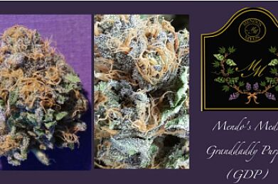 GDP - Grand Daddy Purple (is back, limited to 1/4)