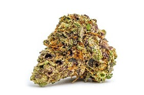 Purple Lamborghini Marijuana Order Weed Online From Revolutionary