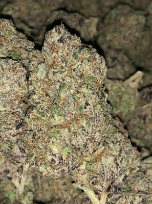 ZPK Marijuana, Order Weed Online From Sticky Thumb Delivery