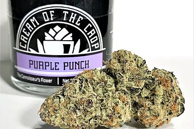 Purple Punch by Cream of the Crop