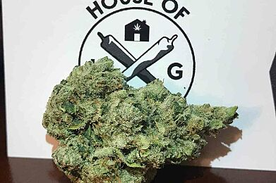 King Louie OG *EXCLUSIVE*