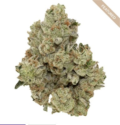 Jungle Cake By The Village Marijuana, Order Weed Online From