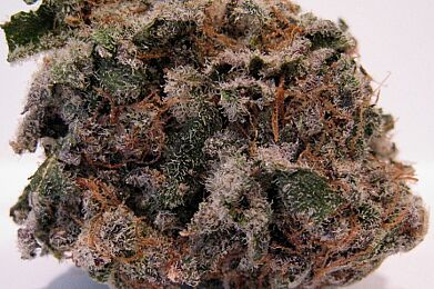 Blueberry Kush