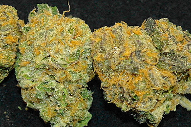 *GDP x GSC ON SALE